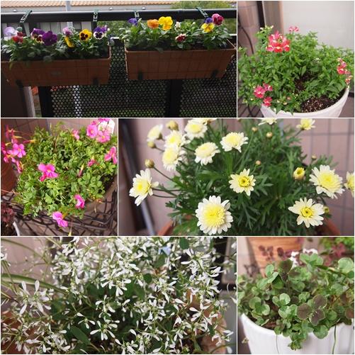 春用の花々1