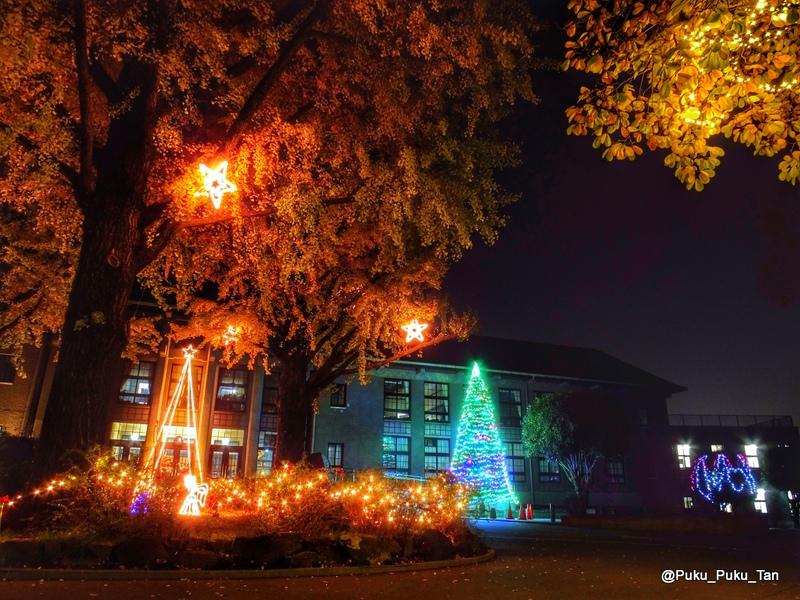 ルーテルクリスマスツリー02