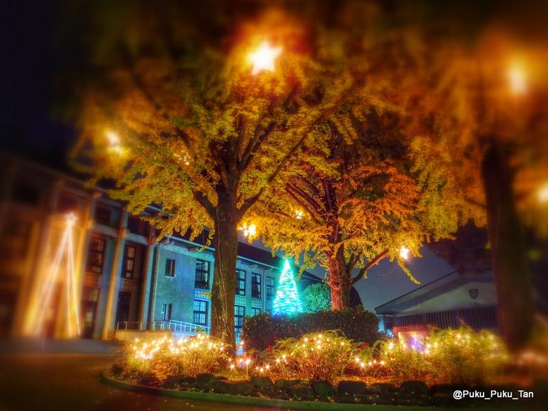 ルーテルクリスマスツリー03