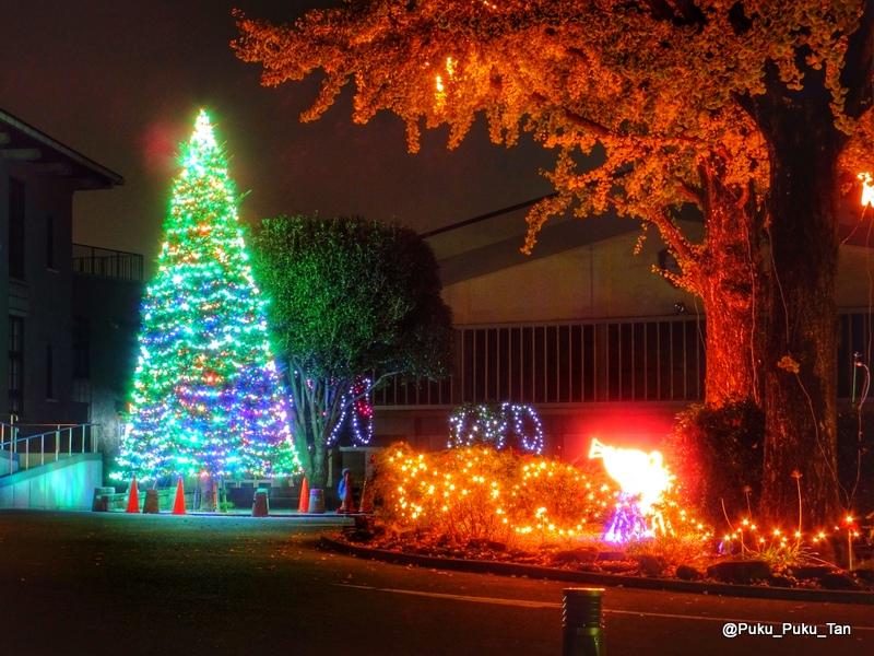 ルーテルクリスマスツリー04