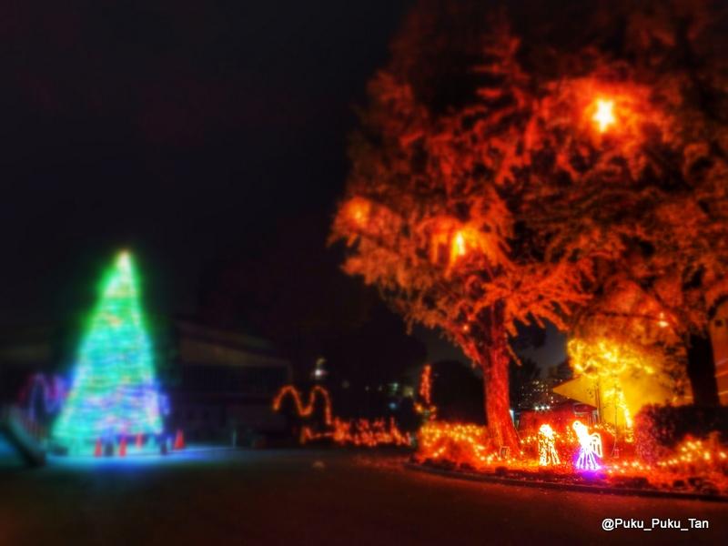 ルーテルクリスマスツリー06