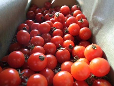 あざみ農園のプチトマト