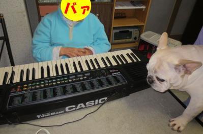 ピアノpia