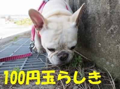 100円玉hiya