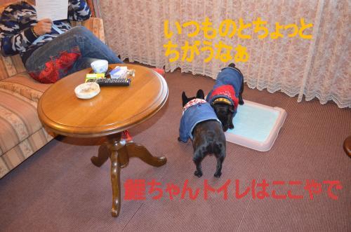 繝帙ユ繝ォ縺ァ遖城ッ雲convert_20130506234855