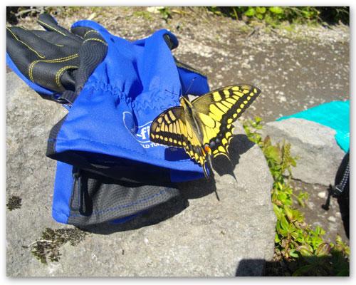 16山頂の蝶