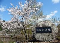 安全祈願碑の桜