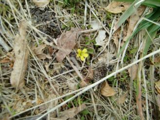 3月9日小さい春