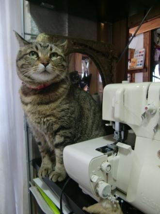3月29日ミシンと猫
