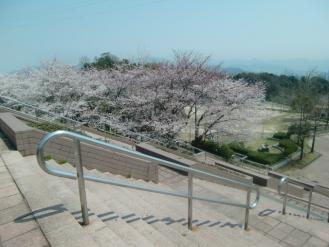 4月10日桜