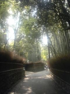 4月24日竹林の小路