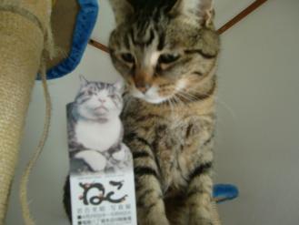 4月21日猫写真展
