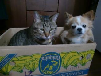 11月4日一箱犬猫