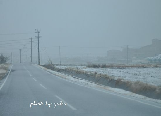 雪208-4