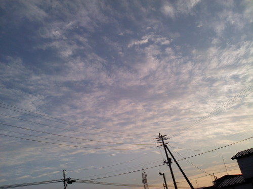 20120810 電柱に烏1