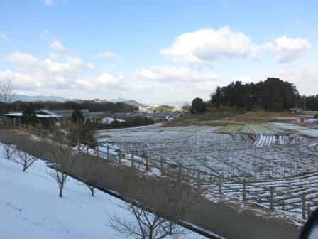 25年1月28日雪
