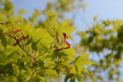 Garden-11_20130506.jpg