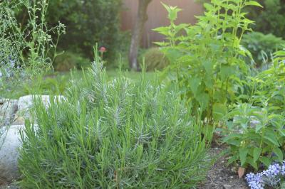 Garden-17_20130514.jpg