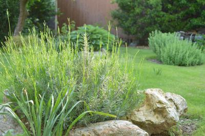 Garden-19_20130514.jpg