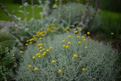 Garden-1_20130609.jpg