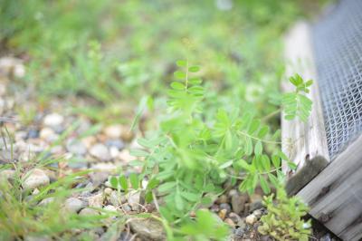 Garden-2_20130407.jpg
