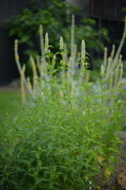 Garden-2_20130609.jpg