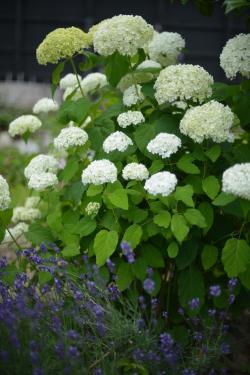 Garden-4_20130609.jpg