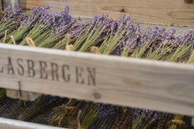 Lavender-2_20130611.jpg