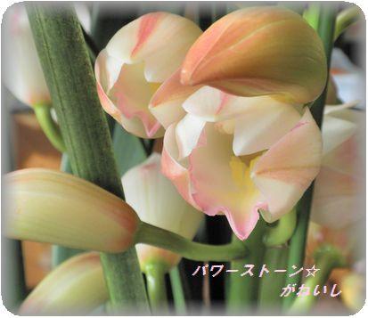 花によって