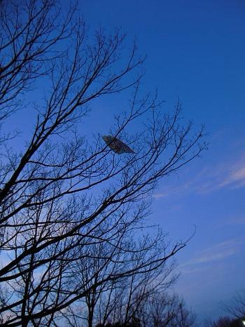 枝の上に捨てられた凧2