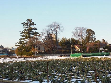 大泉の残雪