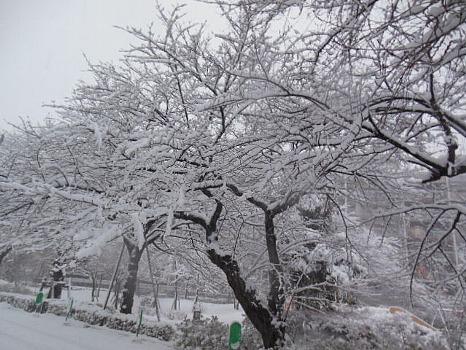 ふり積む雪