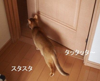 P1270408a.jpg