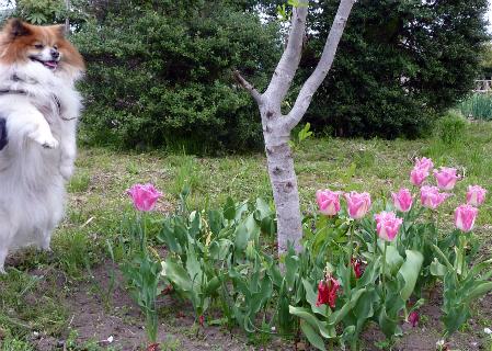 木の芽がブワ~ッてなるとこ