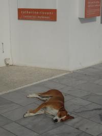 どこでも寝る犬たち。。