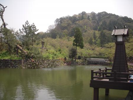 鹿野城跡公園の松#2