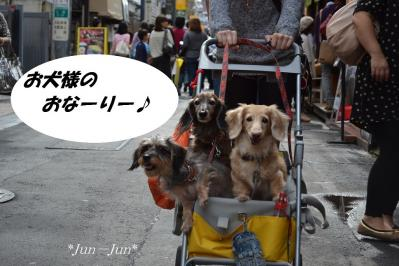 3dogs3.jpg