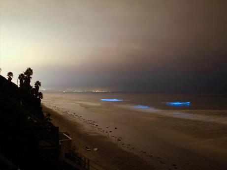 glowing-waves-bioluminescent-ocean-life-explained-leucadia-california_50150_big.jpg