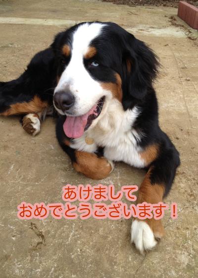 あけましておめでとうございます〜!