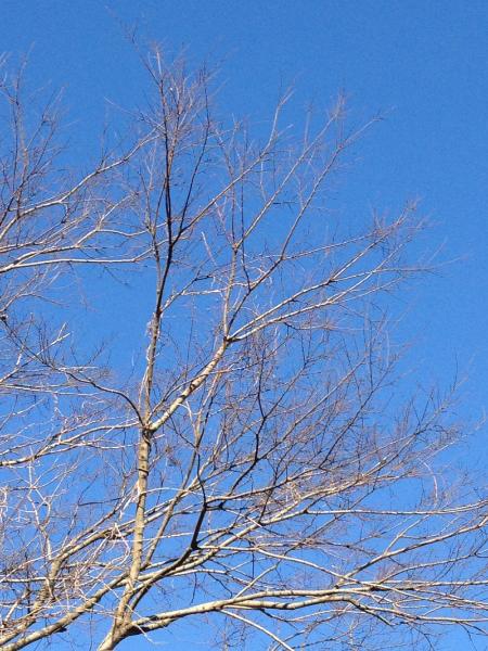 冬晴れの空