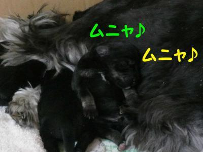 あさひっ子2月21日1