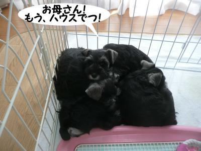 あさひっ子林檎4月9日3
