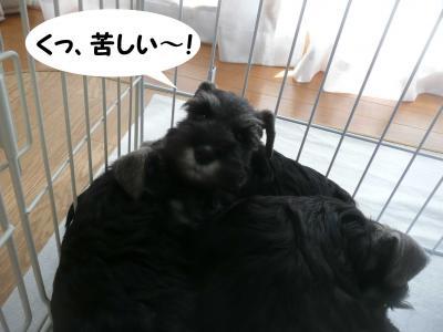 あさひっ子林檎4月9日2