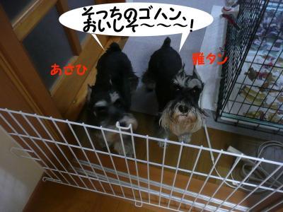 雅&あさひ4月13日