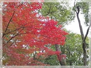 kinkakuji sandou2_2012