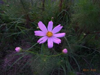 2011_09_22_02.jpg