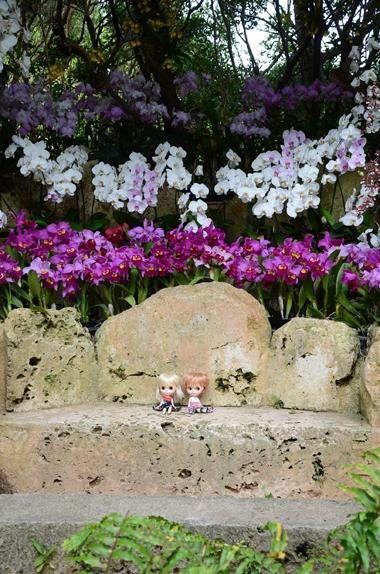 花とブライス。