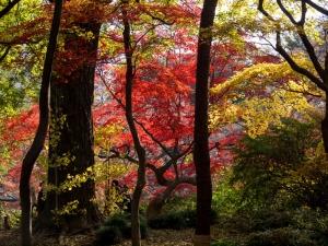 六義園の紅葉 D