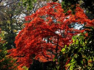 六義園の紅葉 E