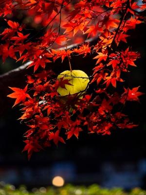 六義園の紅葉 F